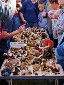 Fungi Walk - Bingley St Ives