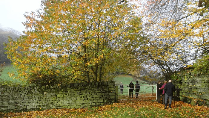 An Autumn Walk in Bingley
