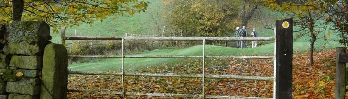 Fallen leaves on a path in Bingley