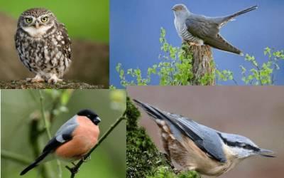 Bird Walks at St Ives Estate