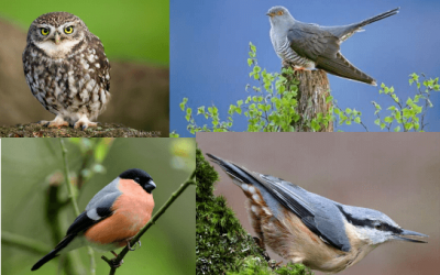 Bird Walks at St Ives Estate
