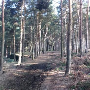Ruin Bank Wood and Saint David' Folly
