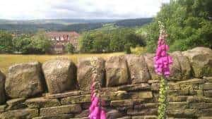 Flowers Above Lady Lane in Bingley