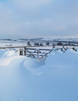 Gate in snow near Eldwick