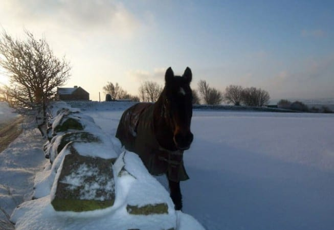 Snow Covered Field near Eldwick with Horse frolicking