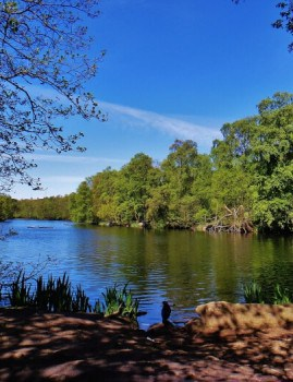 View of Coppice Pond in Bingley St Ives