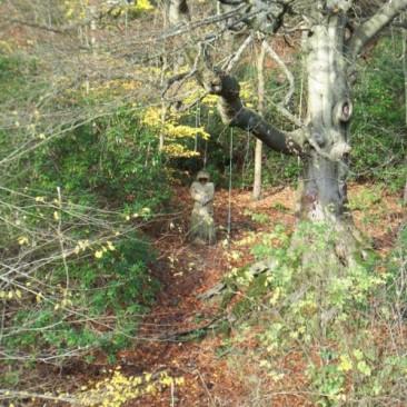 Carved Wooden Monk in St Ives Estate, Bingley