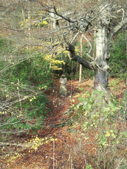 Bingley St Ives Estate near Harden