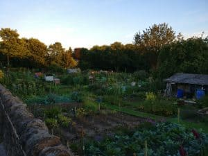 Beck Lane allotments in Bingley