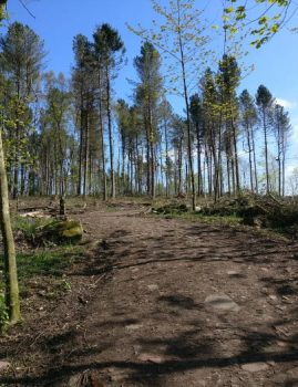 Bettys Wood in St-Ives after deforestation
