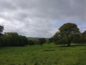Low Park Meadows in St Ives