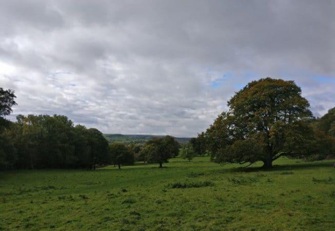 Magnificent oak trees in Low Park Meadows in St Ives Estate near Bingley