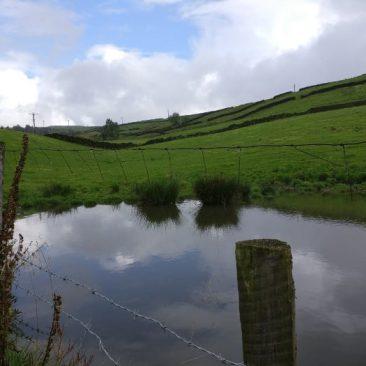 Pond in a field near East Morton