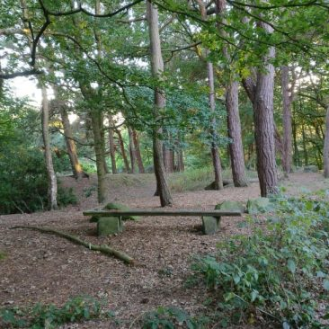 Prince of Wales Park - Bench in the Woods