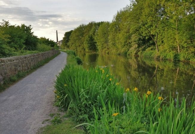 Beautiful Yellow Iris on the Leeds and Liverpool towpath near Bingley