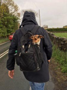 Dog in Rucksack