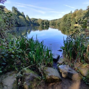 Coppice Pond East Side