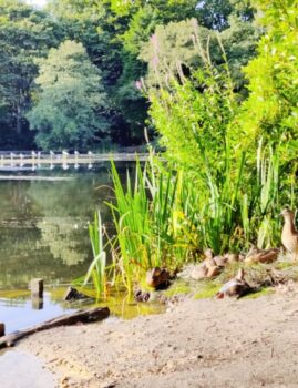 Wildlife at Coppice Pond